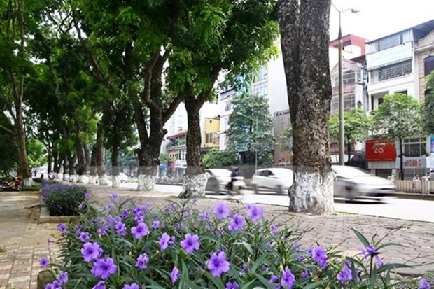 Government imposes fines for damaging trees hinh anh 1
