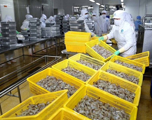 Vietnam's shrimp industry to become key economic sector hinh anh 1