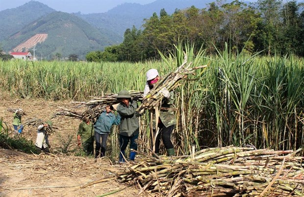 Sugar association looks to Prime Minister for help hinh anh 1