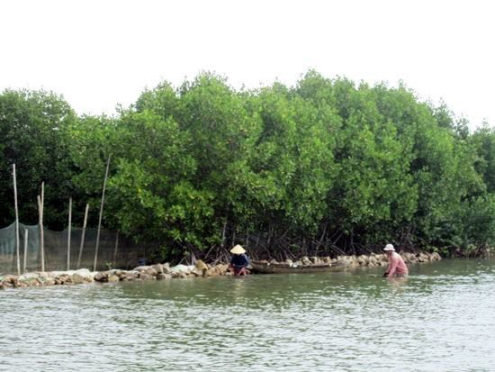 Binh Dinh to invest over 1 mln USD in biodiversity preservation hinh anh 1