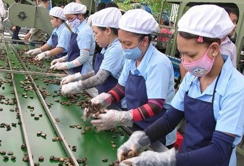 Cashew industry lowers export goal hinh anh 1