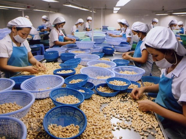 Cashew businesses worry about high price trap in 2018 hinh anh 1