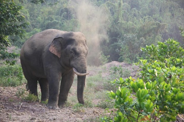 Additional 20km of elephant protection fence in Dong Nai proposed hinh anh 1