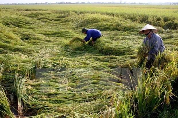 11 billion VND to help poor farmers enjoy Tet hinh anh 1