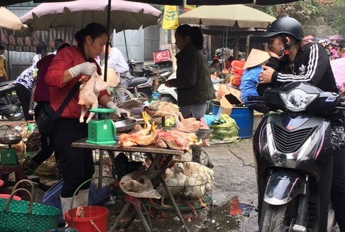 Bird flu outbreak casts pall over Tet hinh anh 1
