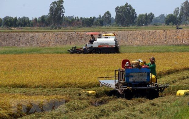 Mekong Delta seeks to turn agriculture challenges into opportunities hinh anh 1