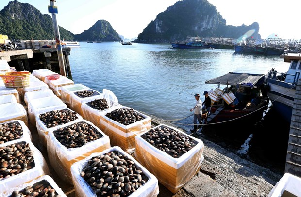 Ministry seeks to gain 40 billion USD from agro-forestry-fishery exports hinh anh 1