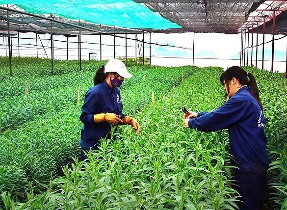 Japan helps develop organic agriculture in Ben Tre hinh anh 1