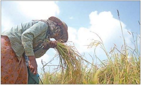 Myanmar to hold rice trade forum hinh anh 1