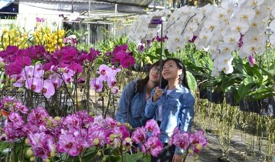 Delta's colourful Sa Dec flower village hinh anh 1