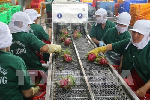 An Giang: Exports of agricultural products, clothing hike in January hinh anh 1
