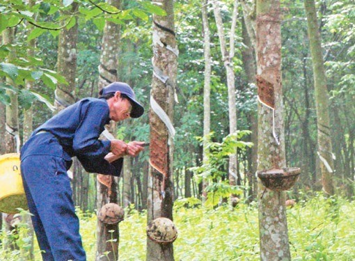 Vietnam Rubber Group eyes higher profits hinh anh 1