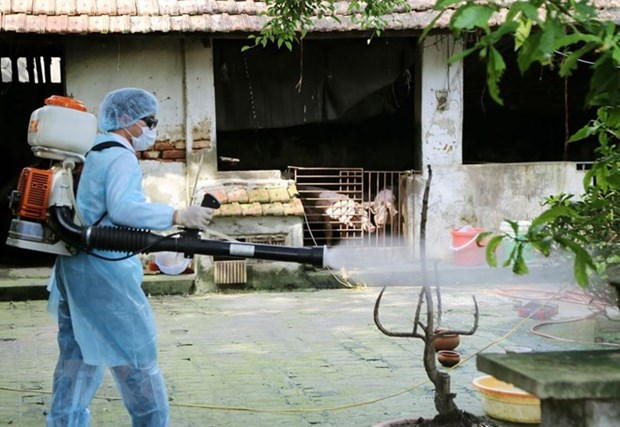 UK helps Vietnam forecast dengue fever epidemic hinh anh 1