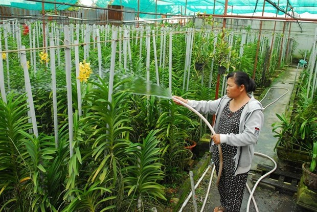 Vinh Long to revamp agriculture hinh anh 1