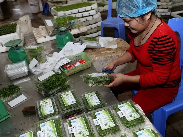 Fruit, veggie exports estimated at 321 million USD in January hinh anh 1