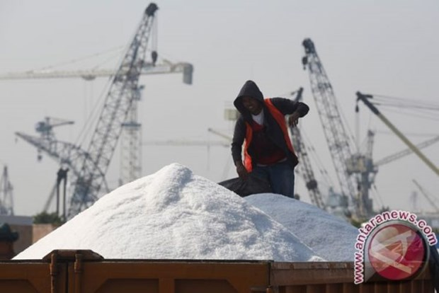 Indonesia likely to stop salt import in 2020 hinh anh 1