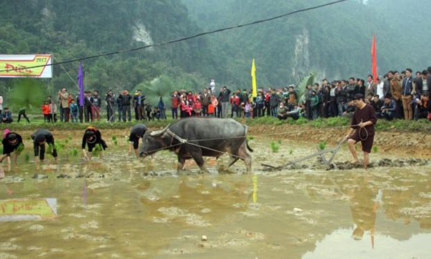 Long Tong, unique farming ritual of the Tay hinh anh 1