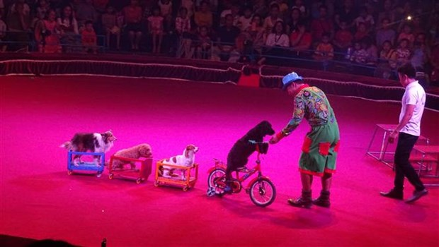 First international circus gala opens in HCM City hinh anh 1