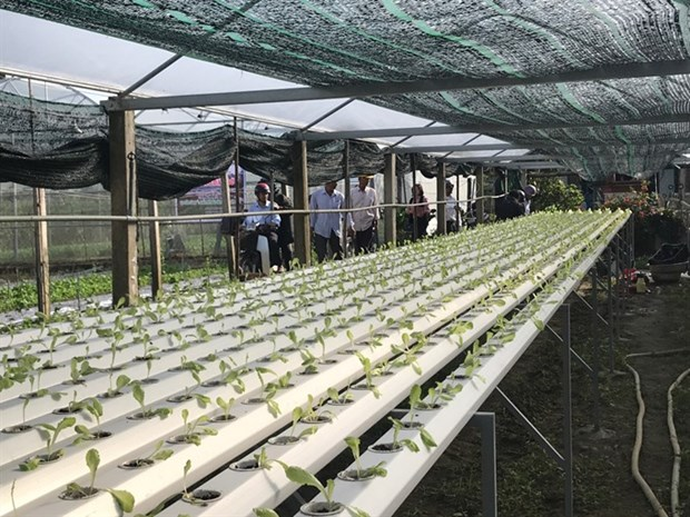 An IT expert promotes 'smartphone farming' hinh anh 1