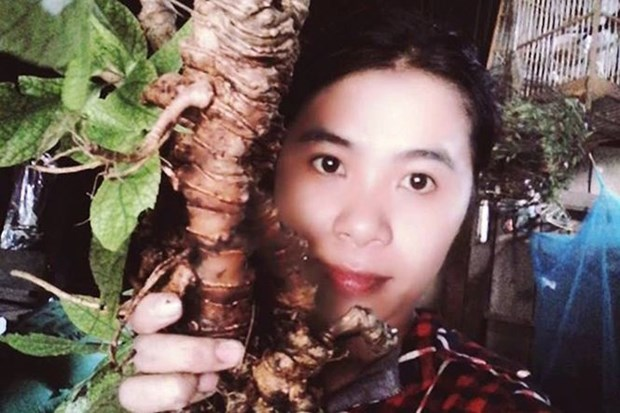 Ginseng queen grows over 600 medicinal plants hinh anh 1