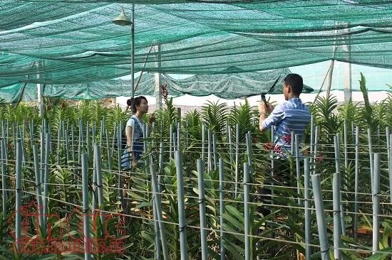 HCM City's farm production shoots up hinh anh 1
