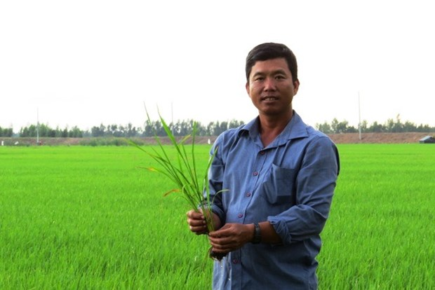 Dong Thap farmer profits from thinking big hinh anh 1