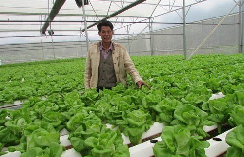 Da Nang to invest in clean vegetables hinh anh 1