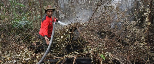 Indonesia declares emergency following forest fire hinh anh 1