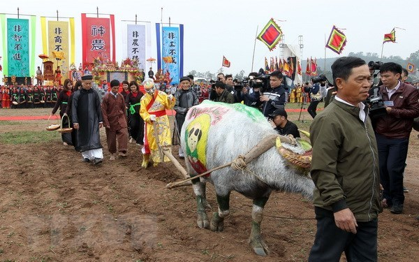 Annual ploughing festival opens in Ha Nam province hinh anh 1