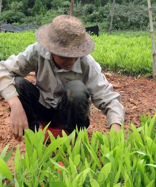 Lang Son launches tree-planting campaign hinh anh 1