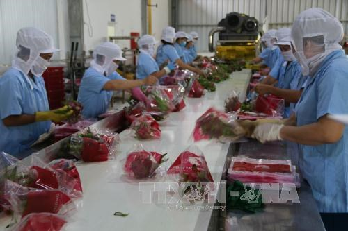 Agro-forestry-fishery exports exceed 6 bln USD in first two months hinh anh 1