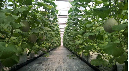 HCM City to pay interest for hi-tech farms hinh anh 1
