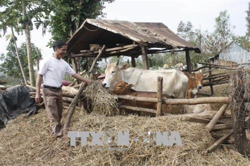 Gia Lai focuses on socio-economic development in ethnic areas hinh anh 1