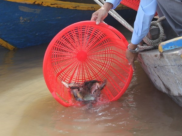 Hanoi: Mass fish release to Red River on Tet festival hinh anh 1