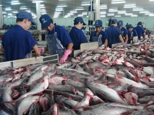 Tra fish prices hit record high amid material shortages hinh anh 1