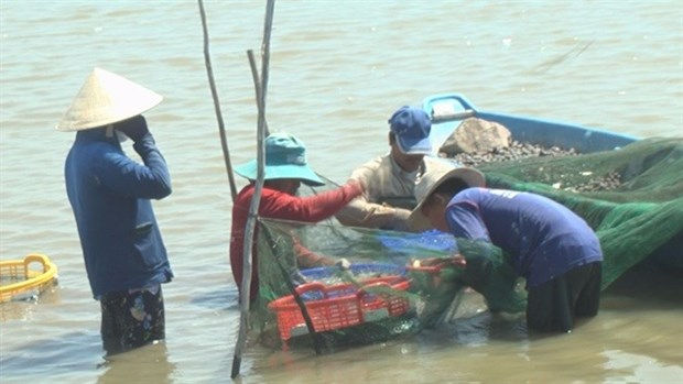 Dong Thap eyes over 2,000ha for prawns hinh anh 1