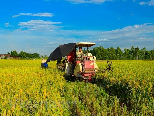 Organic rice project underway in Hai Phong hinh anh 1
