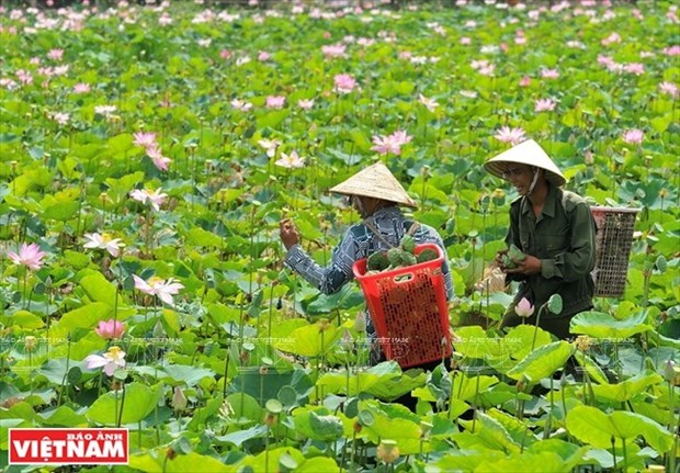 Dong Thap offers diverse tourism products hinh anh 1