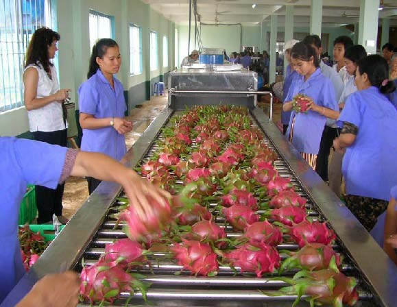 Fruit, vegetable exports continue growth trend in two months hinh anh 1