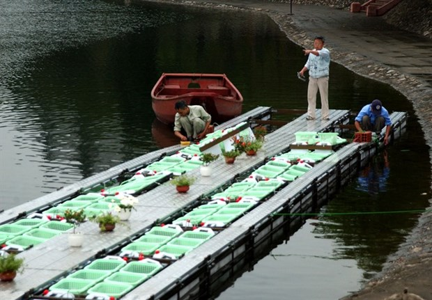 Water quality in Hanoi's lakes improves after cleaning hinh anh 2