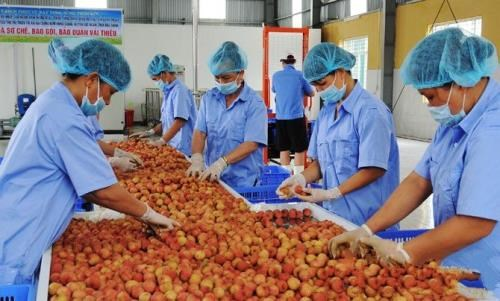 Solutions sought to reduce food losses hinh anh 1