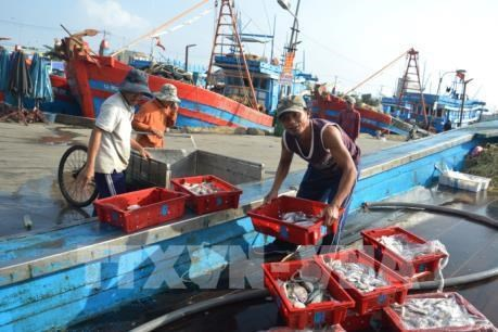 Coastal localities report bumper fishing catches hinh anh 1