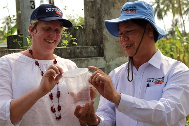 More anti-dengue mosquitoes released in Vietnam hinh anh 1