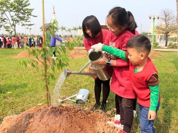 More Japanese cherry trees planted in Hanoi hinh anh 1