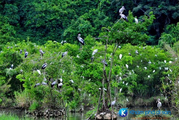 Bac Lieu bird sanctuary faces high risk of fires hinh anh 1