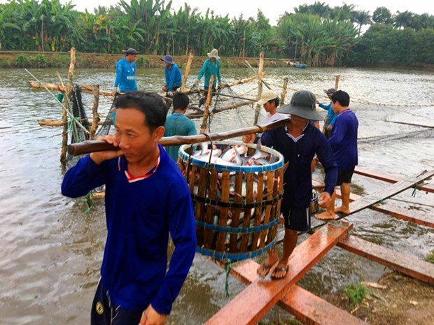 US to inspect Vietnam's pangasius control hinh anh 1