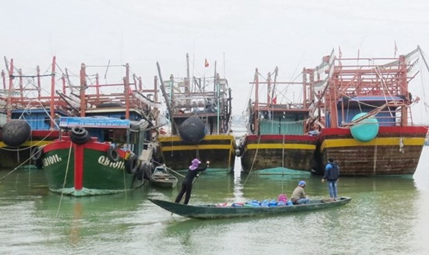 Quang Binh moves to prevent illegal, unreported fishing hinh anh 1