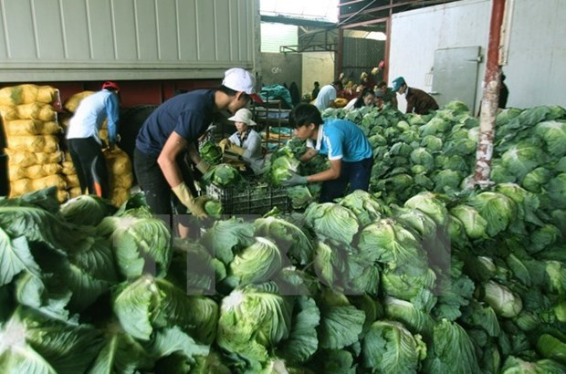 Vietnam targets 4.5 billion USD from farm produce exports by 2020 hinh anh 1