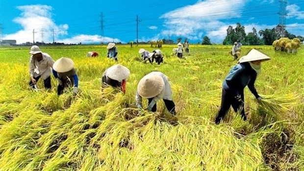 Vietnam, Netherlands to boost agricultural cooperation hinh anh 1