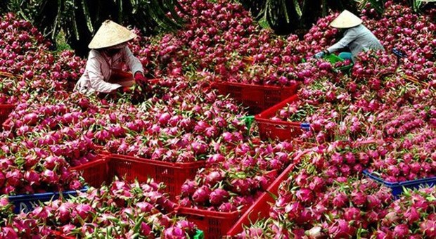 Mekong Delta city expects to increase fruit exports hinh anh 1